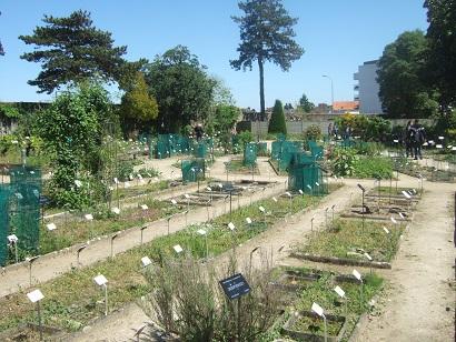 (44) Jardin des plantes - Nantes Dscf6328