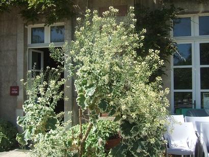 (44) Jardin des plantes - Nantes Dscf6330