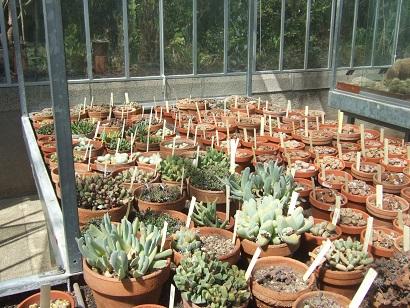 (44) Jardin des plantes - Nantes Dscf6332