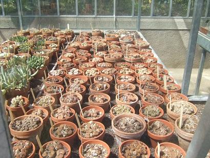 (44) Jardin des plantes - Nantes Dscf6333
