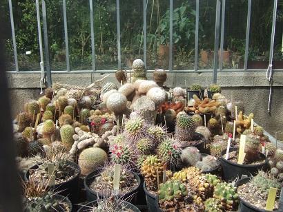 (44) Jardin des plantes - Nantes Dscf6334