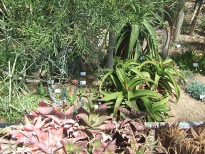 (44) Jardin des plantes - Nantes Dscf6335