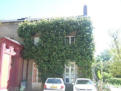 (44) Jardin des plantes - Nantes Dscf6336