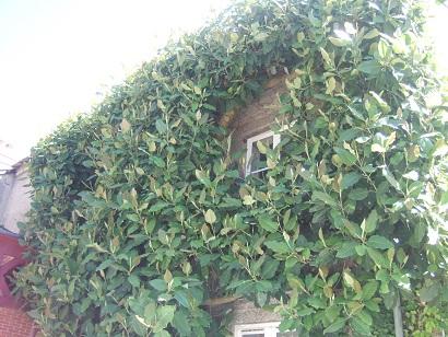 (44) Jardin des plantes - Nantes Dscf6337