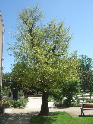 (44) Jardin des plantes - Nantes Dscf6338