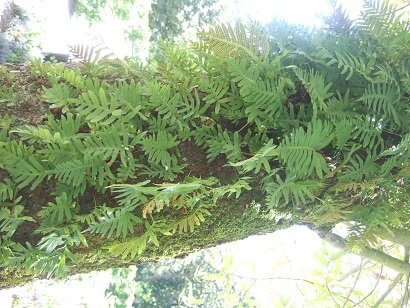 (44) Jardin des plantes - Nantes Dscf6340