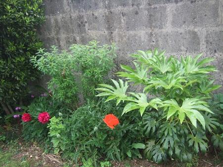 le joli mois de mai des fous jardiniers - Page 6 Dscf6414