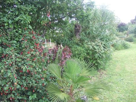 le joli mois de mai des fous jardiniers - Page 6 Dscf6415