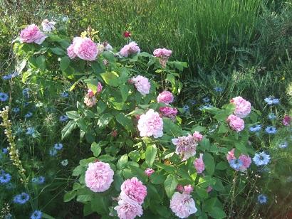 le joli mois de mai des fous jardiniers - Page 8 Dscf6522