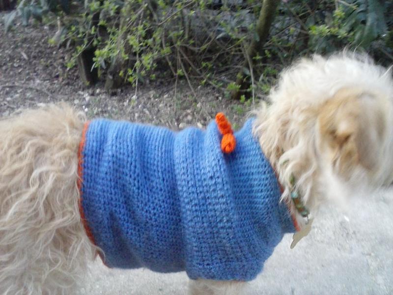 Pull pour petit chien Cam00221