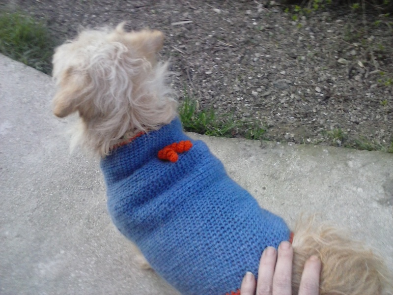 Pull pour petit chien Cam00222