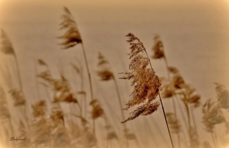 le vent Img_1111