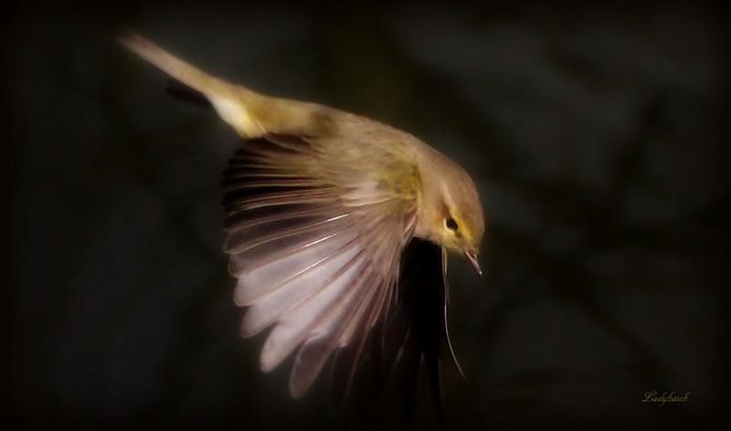 fais comme l'oiseau Img_1911