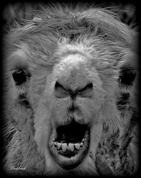 les bosses et les dents Img_2910