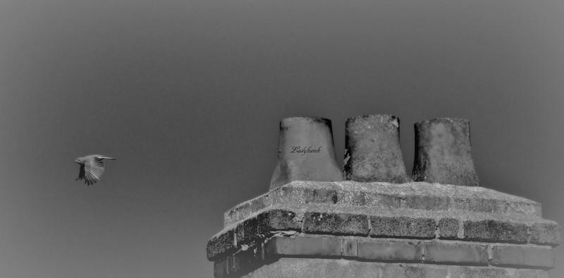les 3 cheminées Img_3510
