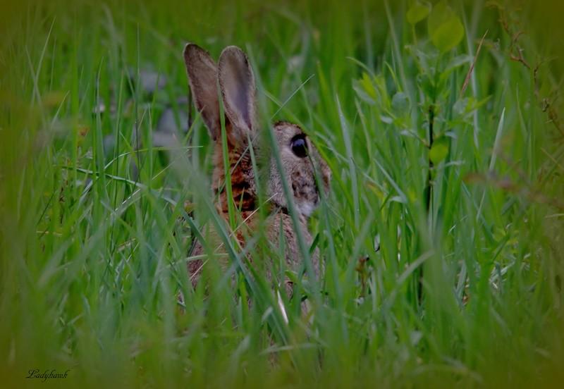 les lapins du matin Img_5712