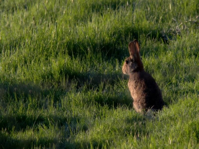les lapins du matin Img_5810