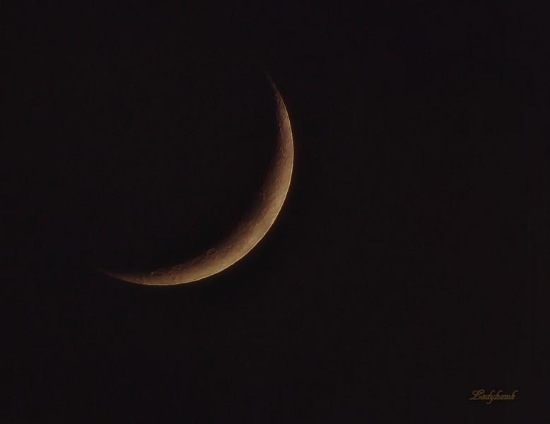 croissant de lune Img_6010
