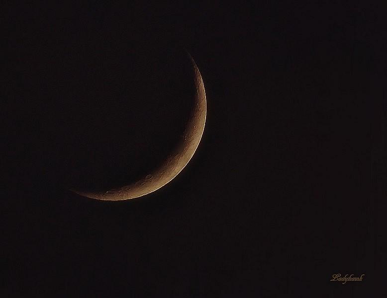 croissant de lune Img_6012