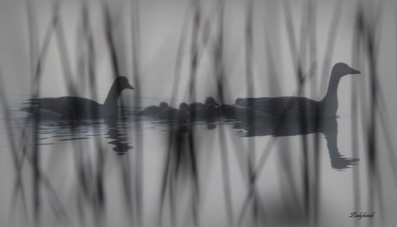 les ombres du lac Img_6110