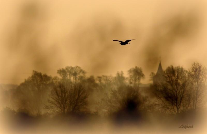 la brume..les roseaux ..le héron.. Img_6210