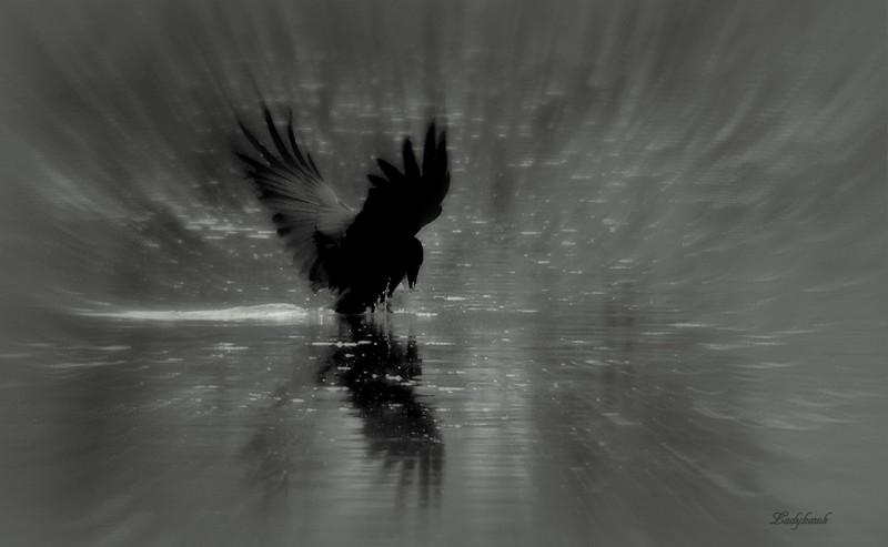 black wings Img_8212