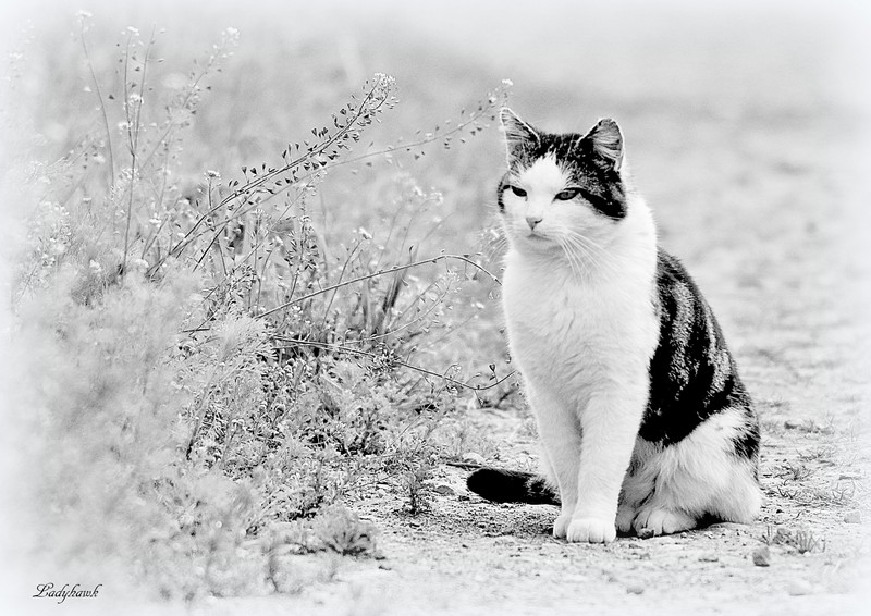 le chat Img_9211