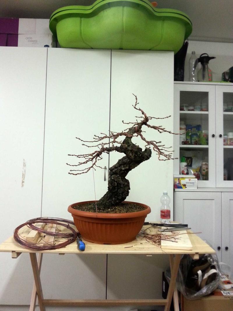 Quercus cerris - Pagina 6 20141110