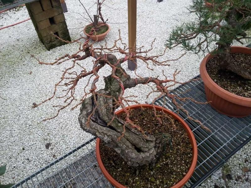 Quercus cerris - Pagina 6 20141212