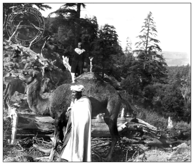 Moussem au Djebel HEBRI AZROU 31c_mo10