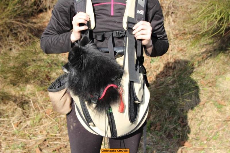 Modes de transport pour petits / vieux chiens qui fatiguent vite - Page 4 Hunter10