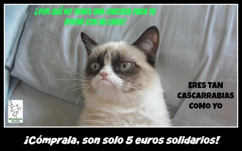 """Esperanza Felina en """"El Mercado de La Almendra"""" en Vitoria - Página 24 Montaj10"""