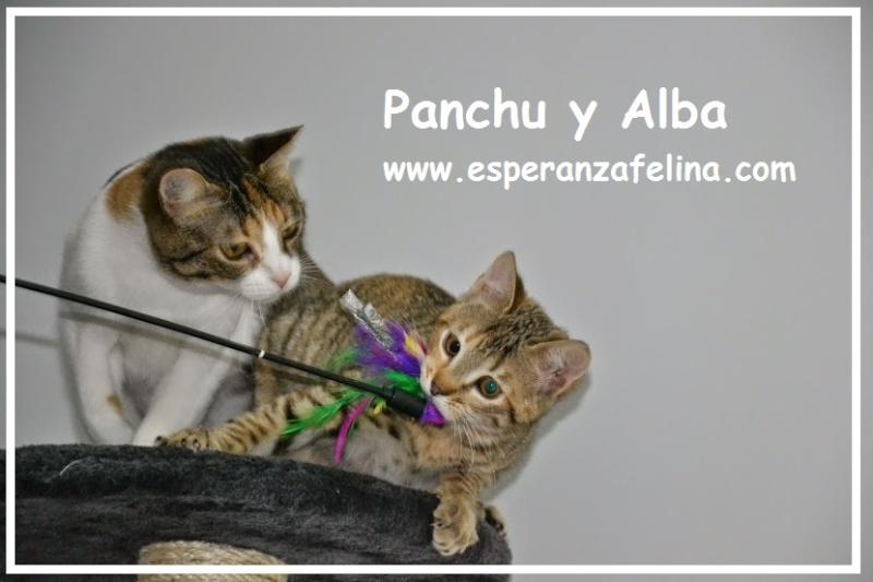 Alba y Panchu, mami e hija abandonadas en una jaula. Álava.(F.N. 28/5/13 y 28/8/14) ¡ADOPTADAS! Panchu10