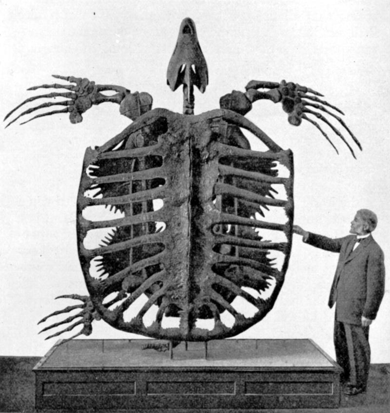 Los animales extintos más impresionantes que han existido Archel10