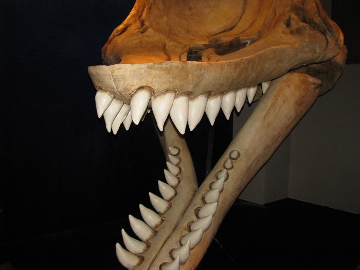 Los animales extintos más impresionantes que han existido Livyat10