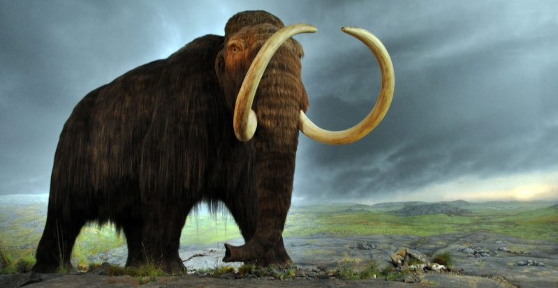 Los animales extintos más impresionantes que han existido Mamut10