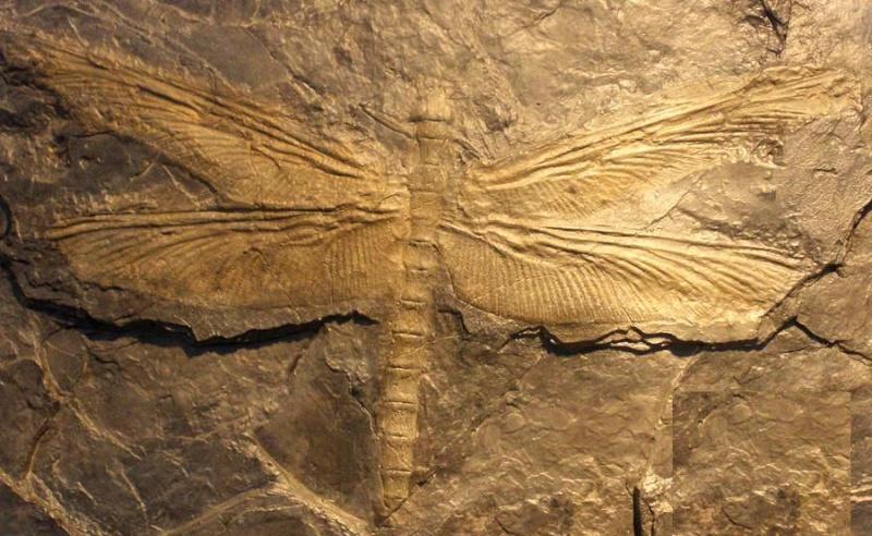 Los animales extintos más impresionantes que han existido Megane10