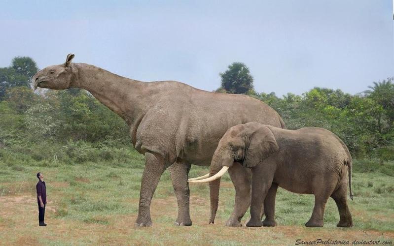 Los animales extintos más impresionantes que han existido Parace10