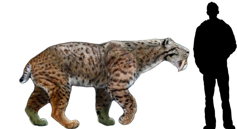 Los animales extintos más impresionantes que han existido Smilod10