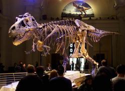Los animales extintos más impresionantes que han existido Tyrann10