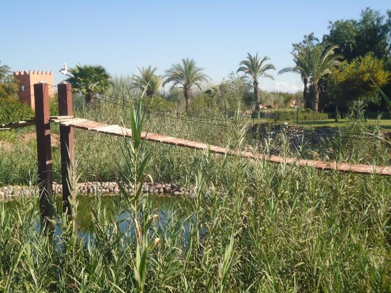 Marokko ganz -  camping à Marrakech (Zone 5): Marokko Ganz :Famille Schatz Dsc00720