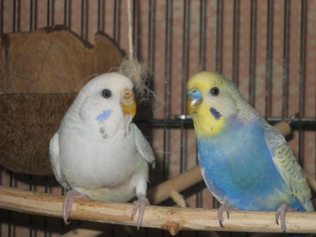 Notre vie avec les oiseaux Onduly18