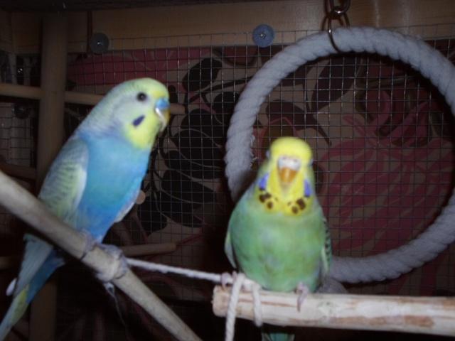 Notre vie avec les oiseaux Onduly19