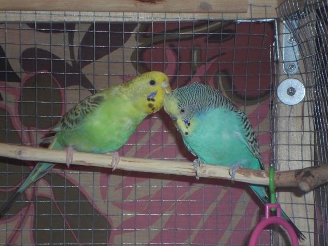 Notre vie avec les oiseaux Onduly20