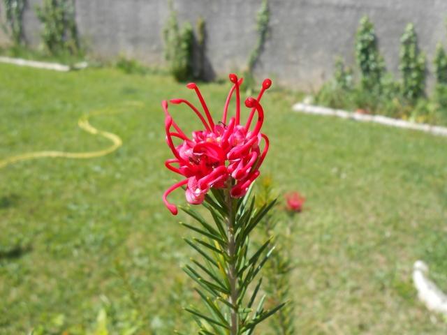 le joli mois de mai des fous jardiniers - Page 4 Tofs_012