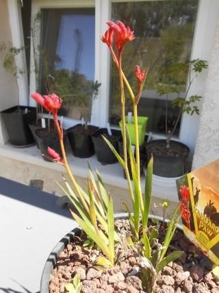 le joli mois de mai des fous jardiniers - Page 4 Tofs_015