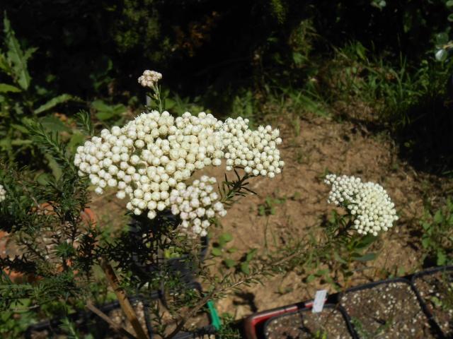 le joli mois de mai des fous jardiniers - Page 4 Tofs_017