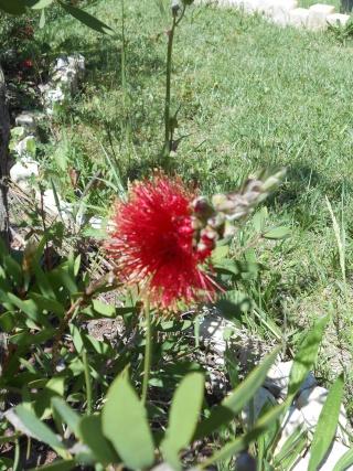 le joli mois de mai des fous jardiniers - Page 4 Tofs_018