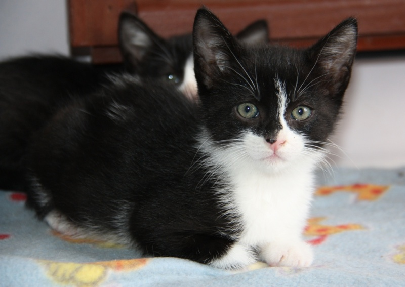Jason, Jasper, Jango et Jessy Cat  (Violette) Jason10