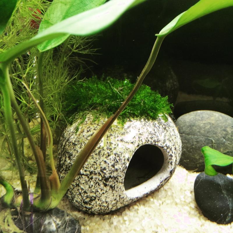 petits soucis plantes fin cyclage Img_2013